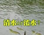 【交流】是清水放苗好还是浓水放苗好?高位土塘都来聊聊!