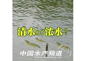 【交流】是清水放(fang)苗(miao)好還是濃水放(fang)苗(miao)好mang)扛呶煌撂煉祭戳牧模(mo) /></a><P class=
