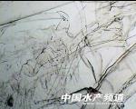 (原(yuan)創)南美白(bai)對蝦(xia)蝦(xia)苗檢測圖解(jie)