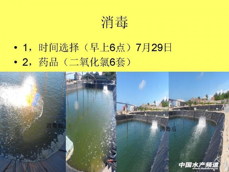 11.8 PPT原作者 做客水