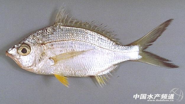 鱼的外形结构指示图