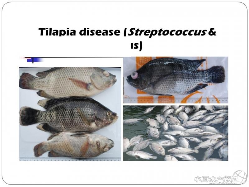 ppt分享之亚太地区水生动物疾病概况——leano(图38)