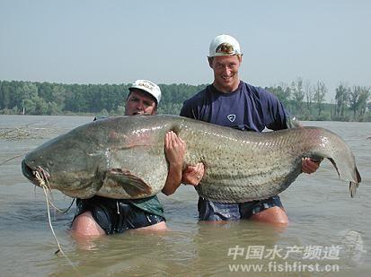 巨型奇怪动物图片