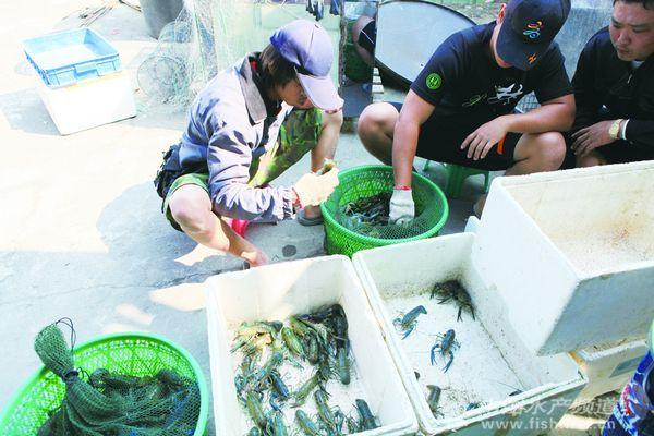 淡水捕虾机电路图