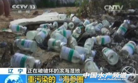 """""""李长青研究员说,""""海参养殖一般为圈养或者底播模式"""