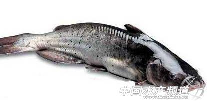 江西省动物棋画法