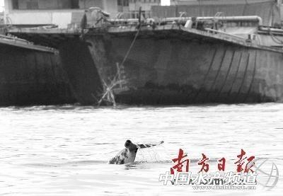 珠江口中华白海豚国家级自然保护区管理局处