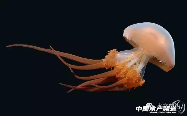 浮游动物总动员集体来亮高颜值