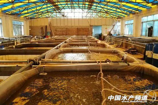 鳅苗孵化池-青黄不接,台湾泥鳅价格稳定,苗价暴涨50