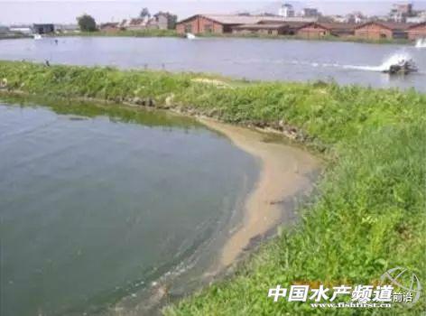 拜耳公司有哪些水产品_拜耳力重建水质改良剂_拜耳水产