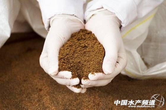 昆虫粉将替代鱼粉,是玩笑,还是讨论?