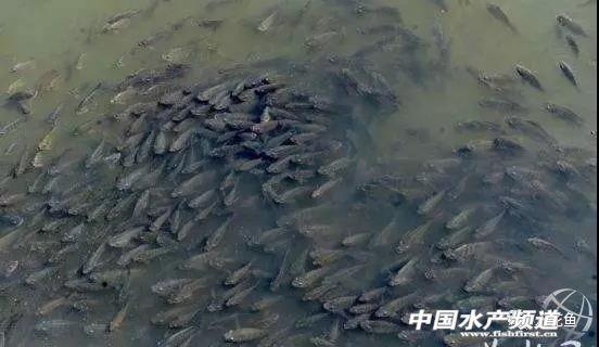 引起鱼类发生疾病的十二大病因