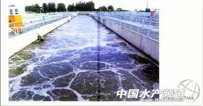 60种生物处理污水妙方,<a href=http://www.aquainfo.cn target=_blank>水产</a>人知道多少?