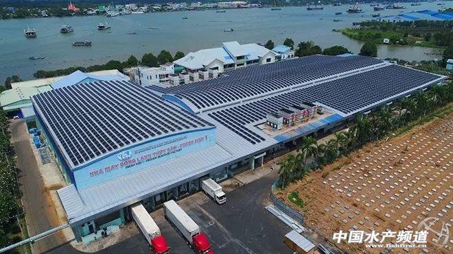 站在巴沙鱼工厂的角度,看越南巴沙鱼产业未来