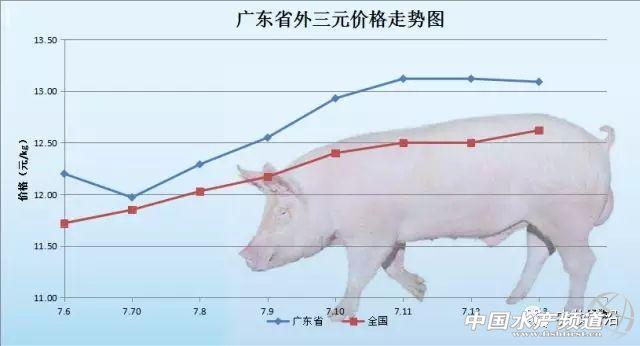 2018年7月13日生猪最新报价