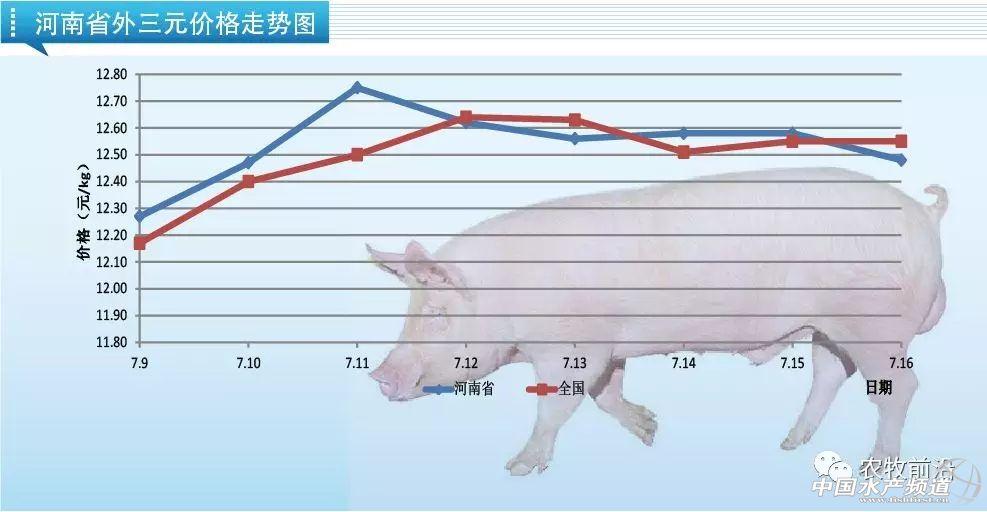 价格平稳,7月16日猪价速报