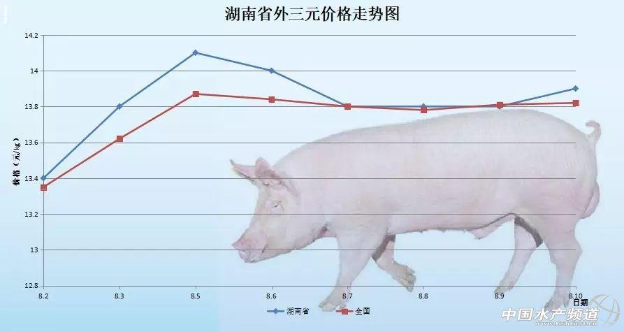 猪价开始上涨!华东地区有望突破7块5——2018年8月10日外三元生猪价格及走势图