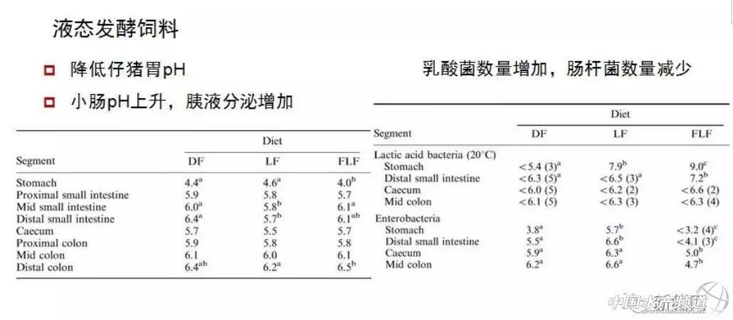 生猪行业如何突破瓶颈?姚文教授:发酵饲料是一种经济的抗生素替代