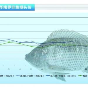 罗非鱼:鱼价整体稳中有升——《亚博足球官网前沿》2018年10月刊市场趋势