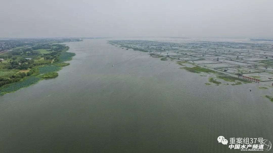 图为阳澄湖,湖中央是养殖大闸蟹区域.新京报记者 半年/摄