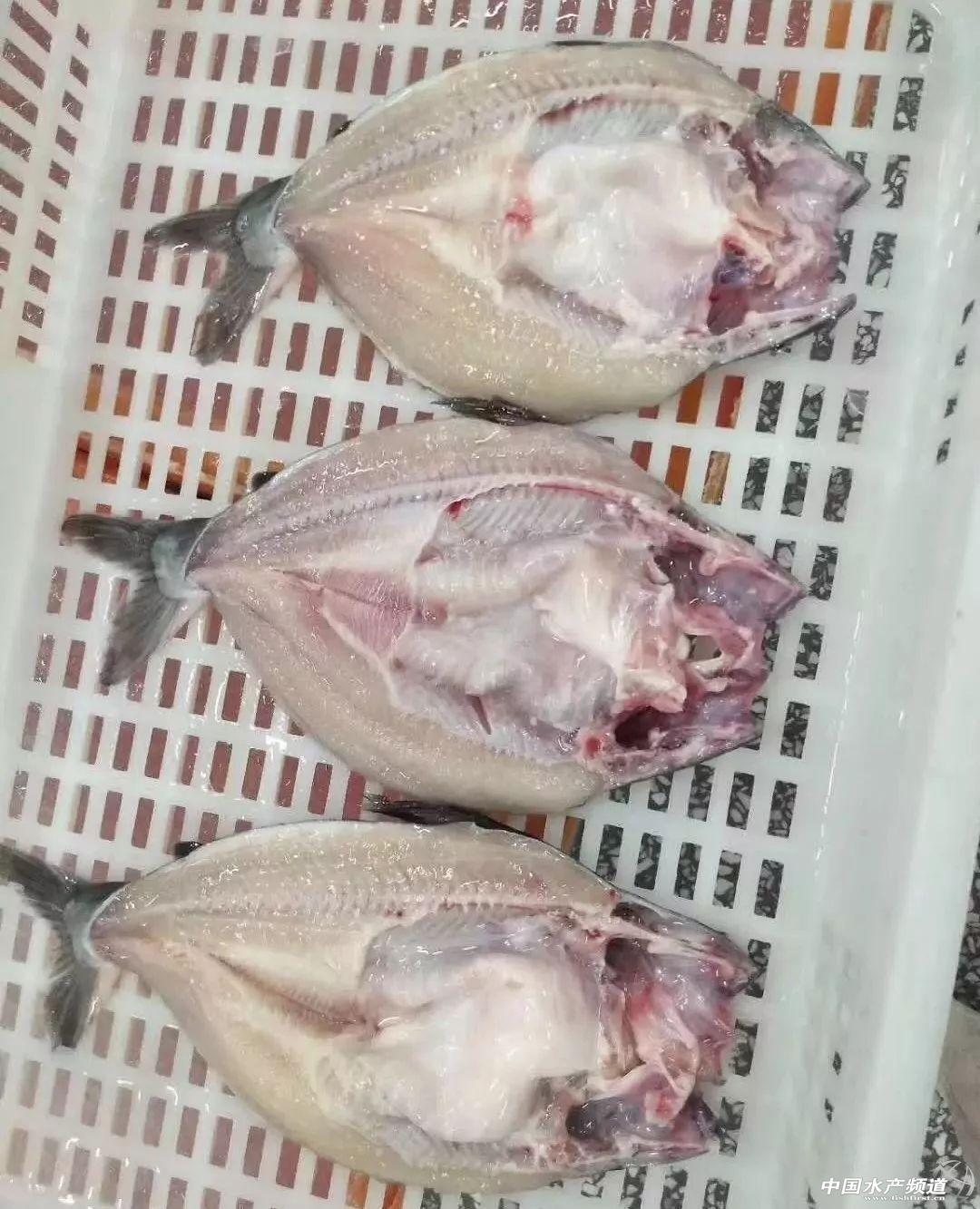 邊貿貨或被替代!國產巴沙魚新機遇,借中美貿易戰殺入開背魚市場