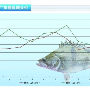 鱖(gui)魚︰國慶節後意外上漲——《水產前沿》2018年11月刊(kan)市場趨勢