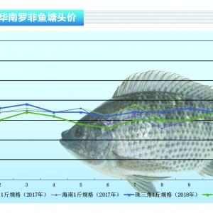 罗非鱼:工厂收购减少,后市鱼价趋向下行——《亚博足球官网前沿》2018年12月刊市场趋势
