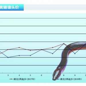 黄鳝:价格回调,长期趋于稳定——《亚博足球官网前沿》2018年12月刊市场趋势