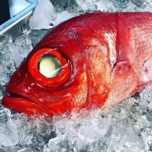"""干货!""""红鱼""""要火!怎样分清楚这些红色鱼?"""