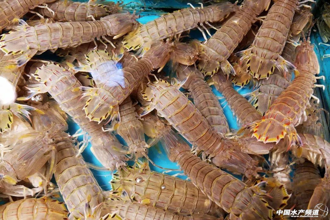 蚕豆的做法:皮皮虾最肥美