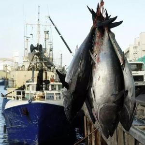 """挺进深蓝的""""甬家军"""",成为海洋渔业""""领航者""""。"""