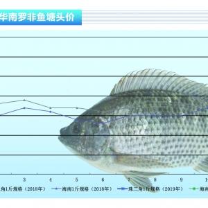 罗非鱼:整体鱼价趋向稳定——《亚博足球官网前沿》2019年3月刊市场趋势