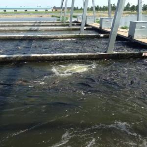 循环水养殖这么火!如何组装池塘循环流水养殖系统?