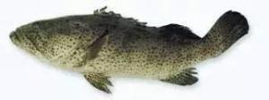 44种名贵海鲜及鱼类,你认识多少种?