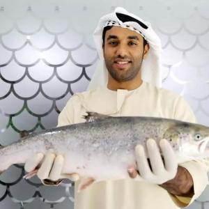 """""""沙漠里的三文鱼""""在迪拜上市"""