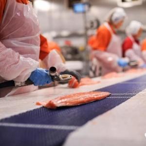 全球最大三文鱼生产商挪威Mowi上海新厂即将启动!