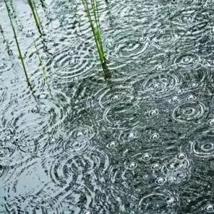 春雨过后,池塘常出现的水质问题以及处理方法