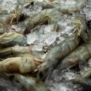 美国进口商虾价看跌,市场难以逆转