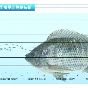 罗非鱼:供应不足,鱼价稳企——《亚博足球官网前沿》2019年4月刊市场趋势