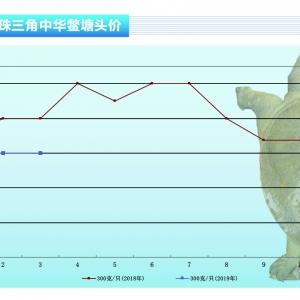 甲鱼:三月温室甲鱼价格止跌回稳——《365bet_365bet官网开户网址_365bet注册ribo88点cc前沿》2019年4月刊市场趋势