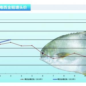 金鲳:市场严重缺鱼,持续3个月大涨——《365bet_365bet官网开户网址_365bet注册ribo88点cc前沿》2019年4月刊市场趋势