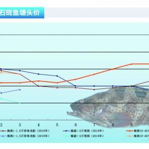 石斑鱼:产量大价格低迷,超8成养户无利可图——《365bet_365bet官网开户网址_365bet注册ribo88点cc前沿》2019年4月刊市场趋势