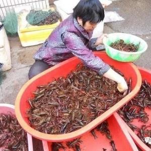 小龙虾市场价格价格波动巨大,你怎么看?
