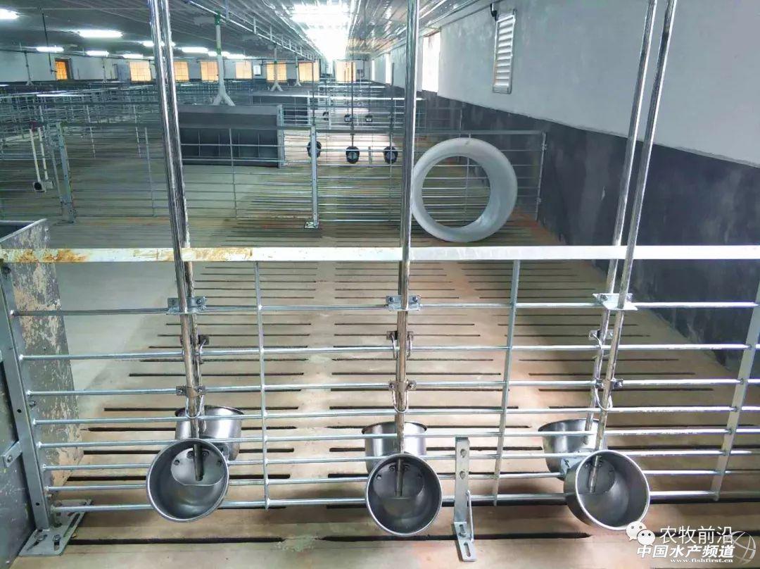 猪场内配置饲料厂你怎么看?非瘟形式下的全自动化猪场还吃香吗?