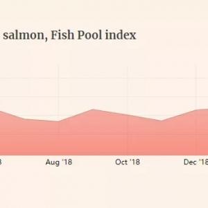 复活节前夕供应紧张,挪威三文鱼涨至17美元/斤