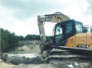 500亩鱼塘、虾塘依法拆除,为红树林让路
