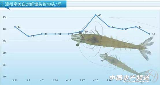 40条45元/斤,如东虾价领跑全国!