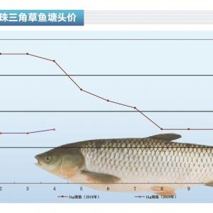 草魚︰價格長線有望漲——《duan) chan)前(qian)沿》2019年6月刊(kan)市場趨勢