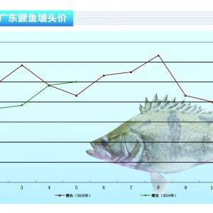 鱖(gui)魚︰持zhong)pan)升(sheng),漲勢喜人——《水產前沿》2019年6月刊(kan)市場趨勢