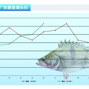鱖(gui)魚︰大幅飆升(sheng),漲幅驚人——《水產前沿》2019年7月刊(kan)市場趨勢